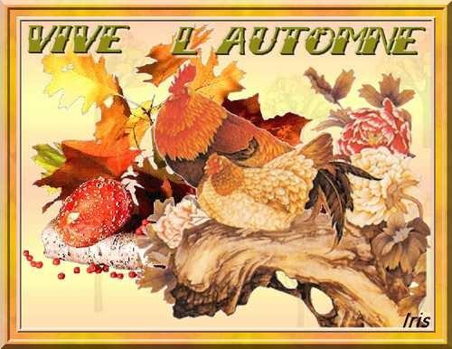 Vive l 39 automne et ses belles couleurs feu - L automne et ses couleurs ...